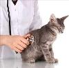 Ветеринарные клиники в Сосновом Бору